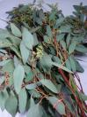 Eucalyptus Seeded (California)